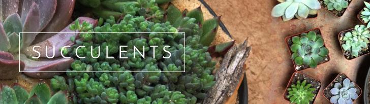 Succulent and Cactus Gardens